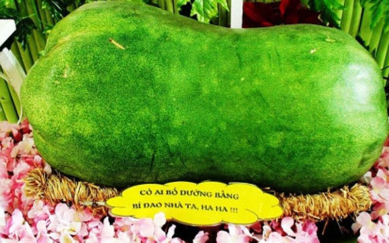 Bí đao khổng lồ được trưng bày tại Lễ hội trái cây Nam Bộ khiến các bà nội trợ mê mẩn (Ảnh: KT)