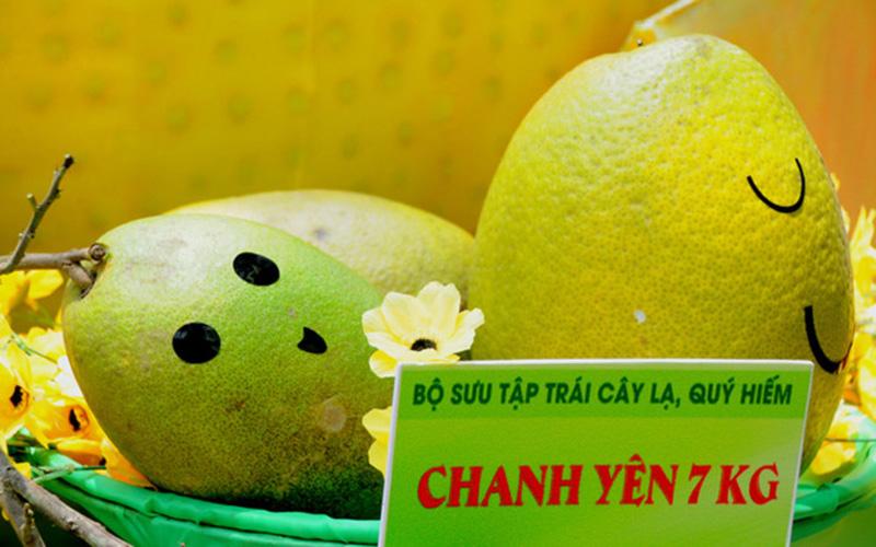 Trái chanh yên có trọng lượng tới 7kg (Ảnh: Ngôi sao)