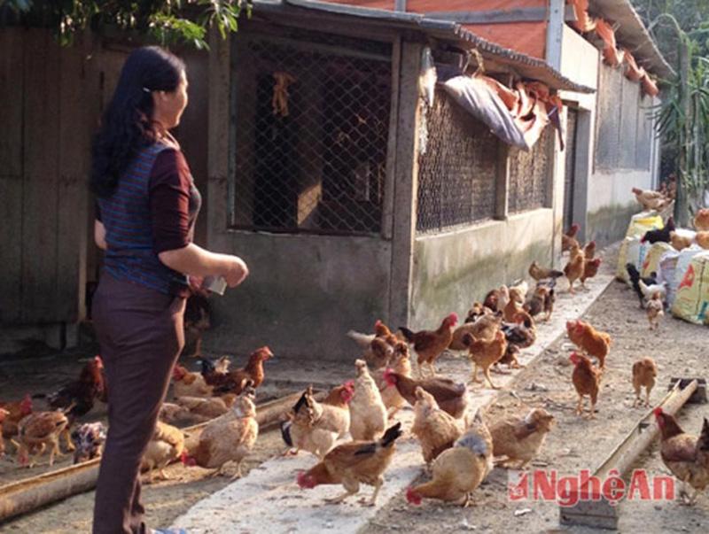 Một hộ gia đình nuôi gà vườn đồi tại xã Thanh Mỹ, Thanh Chương. (Ảnh: Phú Hương)