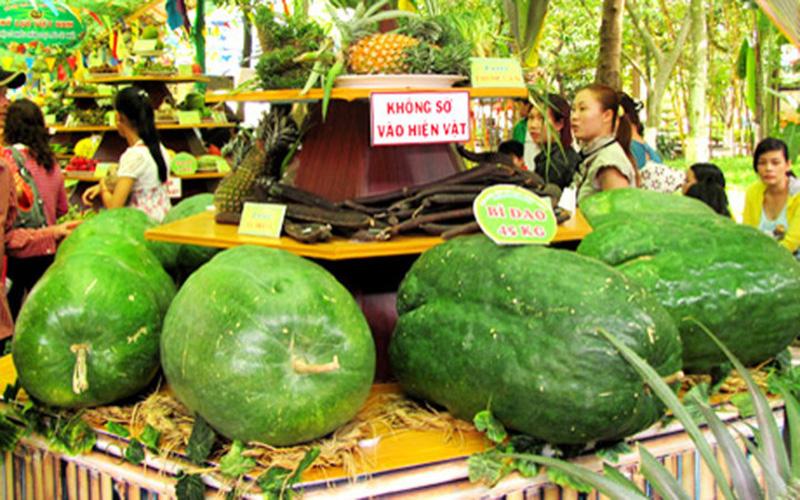 Rất nhiều trái bí đao nặng vài chục kg được trưng bày tại Lễ hội Trái cây Nam Bộ (Ảnh: KT)