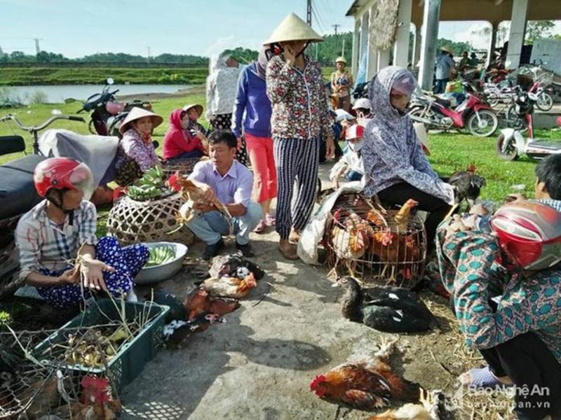 Tại các chợ quê, chợ huyện ở Thanh Chương gà trống thật đẹp giá 100.000 đồng/kg, gà mái, gà già chỉ từ 80.000- 90.000 đồng/kg. Gà bán tại Vinh gà đẹp giá 120.000 đồng/kg. (Ảnh: Đình Hà)