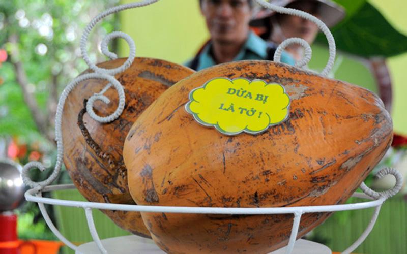 Quả dừa nặng hơn 10 kg khiến nhiều người trầm trồ (Ảnh: Ngôi sao)