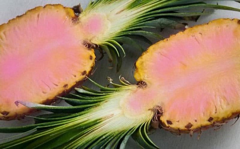 Loại dứa biến đổi gen màu vàng pha hồng cực quyến rũ này sẽ có vị ngọt hơn so với
