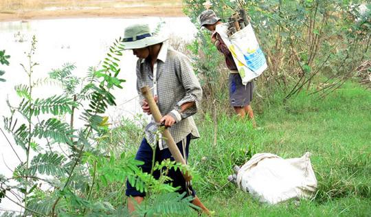 Đặt trúm bắt lươn đồng là thú vui của lũ trẻ miền quê.