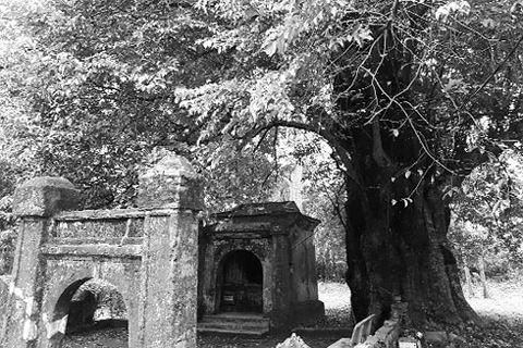 Miếu cây Thị, một di tích nổi bật trong làng Phước Tích với cây thị cổ có tuổi đời trên 600 năm, đã được tôn vinh là Cây di sản Việt Nam.