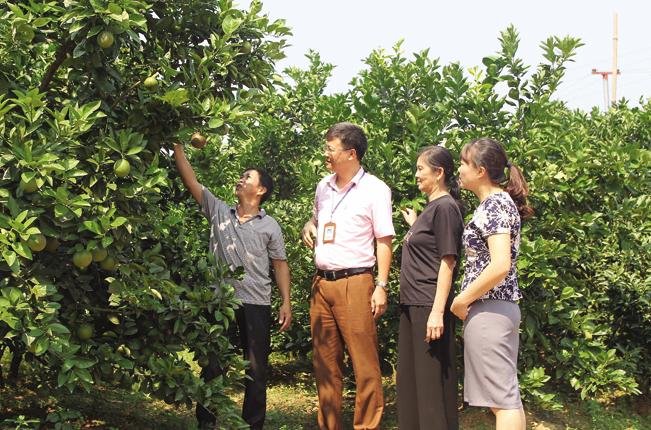 Gia đình anh Hoàng Văn Mạnh ở thôn Mỵ To, xã Trù Hựu (Lục Ngạn, Bắc Giang) sử dụng nguồn vốn NHCSXH hiệu quả, đã vươn lên thoát nghèo, trở thành hộ khá giả.