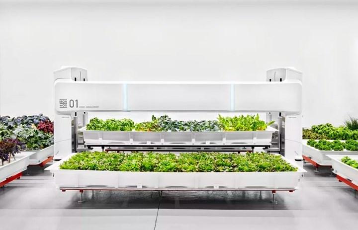 Các cánh tay robot tự động sẽ thu hoạch cây trồng bằng cách giữ chặt các chậu cây. (Ảnh: The Guardian).