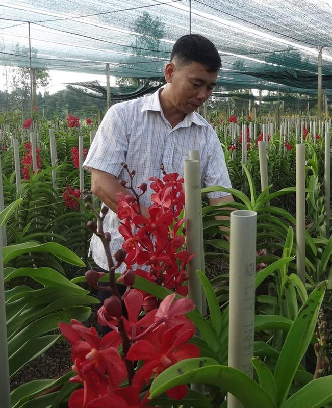 Mô hình trồng lan mang lại thu nhập cao ở ngoại thành TP.HCM. nongnghiep.vn