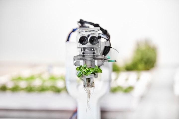 Trong 2,5 năm qua, trang trại này được sản xuất nhờ các robot, dưới sự điều hành và cung cấp dữ liệu của phần mềm AI mang tên The Brain. (Ảnh: Tech Crunch).