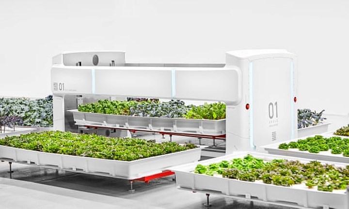 Với diện tích 185m2 các loại rau và thảo dược được đặt trong các chậu riêng biệt. Robot