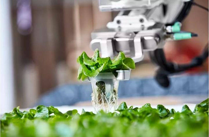 Hành động này sẽ làm giảm hư hỏng tới nông sản, bằng cách thiết kế cho máy móc nhận diện được cây trồng và phân tích chúng với tỉ lệ dưới milimet. (Ảnh: The Verge).