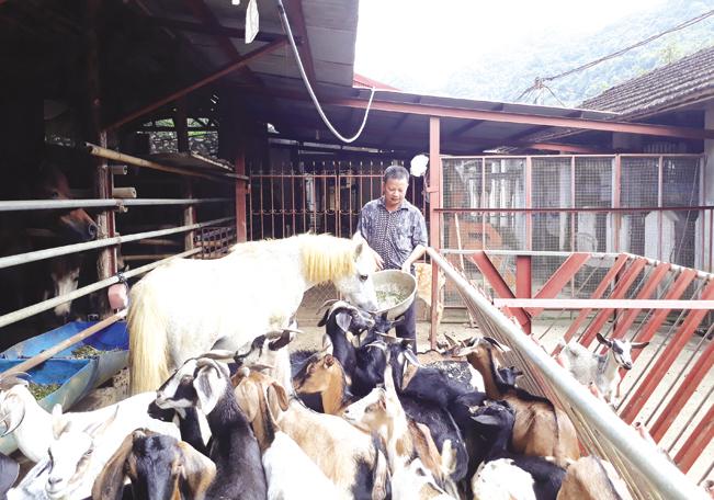 Ông Trịnh Văn Tiến chăm sóc đàn hươu, dê trong trang trại.