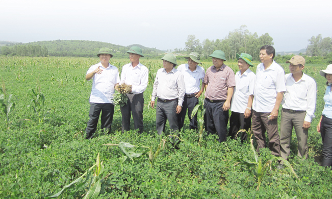 Lãnh đạo các địa phương trên địa bàn tỉnh Quảng Trị thăm, học hỏi mô hình trồng lạc tưới tiết kiệm cho năng suất cao ở huyện Cam Lộ.