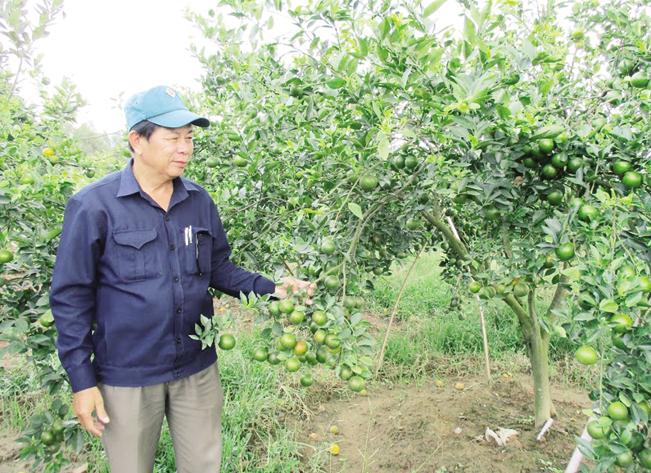 Từ vùng đất khô cằn, ông Phan Ngọc Anh đã xây dựng thành công trang trại kiểu mẫu rộng hơn 10ha, theo mô hình VAC.