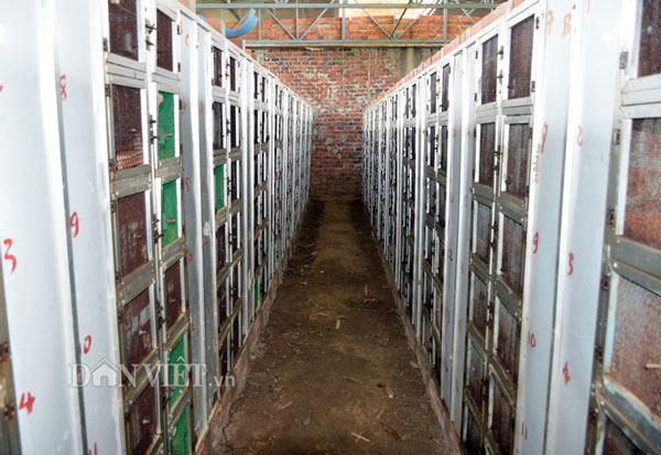 Với diện tích khoảng 1.500 m2, anh Quốc xây dựng trang trại kiên cố với khoảng 1.300 hộc để nuôi rắn hổ đất. Ảnh: Chúc Ly.