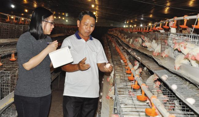 Với việc nuôi gần 8.000 con gà mái đẻ, trung bình mỗi năm ông Diện cung cấp ra thị trường khoảng hơn 1 triệu quả trứng gà an toàn sinh học.
