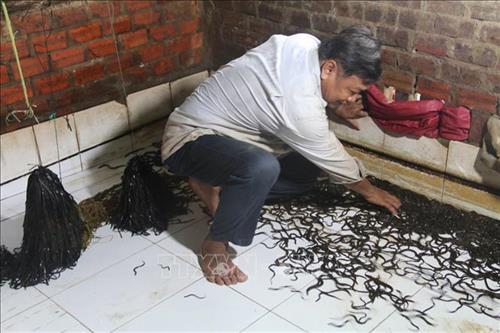 Khu ương lươn bột thành lươn giống của gia đình ông Đặng Văn Hai.(Ảnh: Minh Trí - TTXVN)