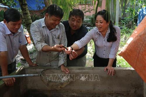 Ông Đặng Văn Hai (thứ 2 từ trái sang) giới thiệu lươn hậu bị với khách tham quan mô hình. (Ảnh: Minh Trí - TTXVN)