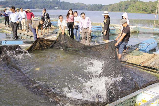 Các loại cá đặc sản có trọng lượng trên 2kg, anh Mừng phải nuôi 2 năm mới thu hoạch.