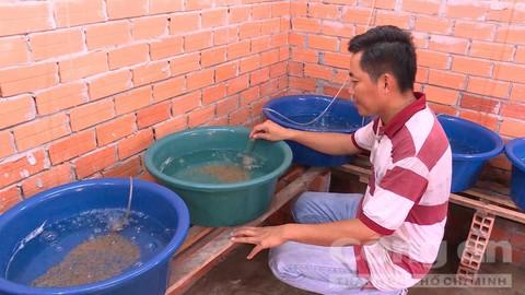 Tân giới thiệu lươn giống nở đồng đều và sạch bệnh.