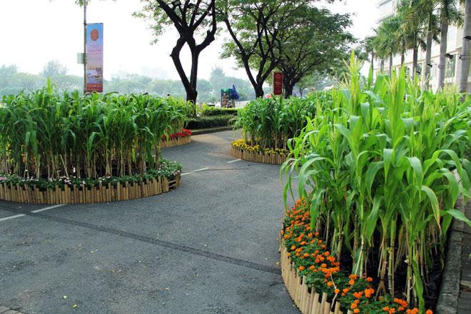Những ruộng bắp với con đường quanh co, những hàng dừa nước cũng được tái hiện tại Hội chợ hoa xuân.