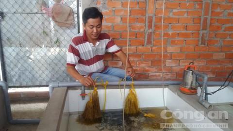Anh Tân ươm trứng lươn trong nhà.