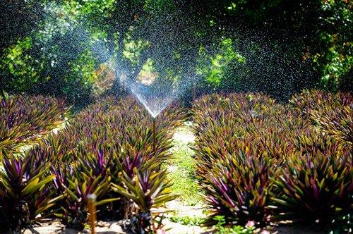 Để có thể đáp ứng được các tiêu chuẩn châu Âu, vùng trồng cây dược liệu phải đảm bảo rất nhiều điều kiện về nguồn đất, nước.