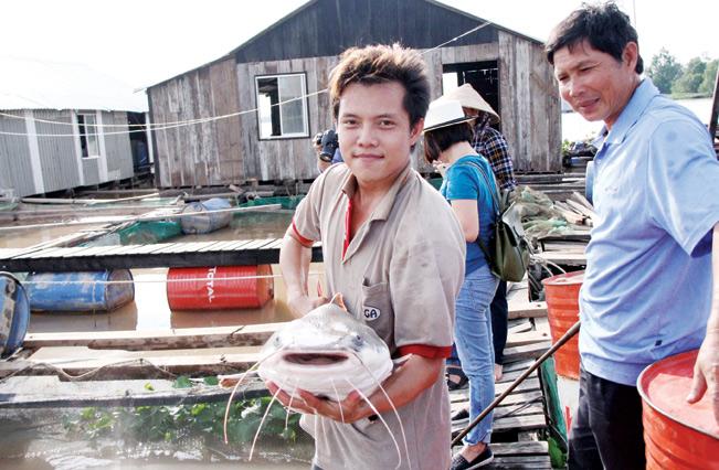 Một trong những loại cá đặc sản, quý hiếm được nuôi trên bè cá của anh Bảy Bon.
