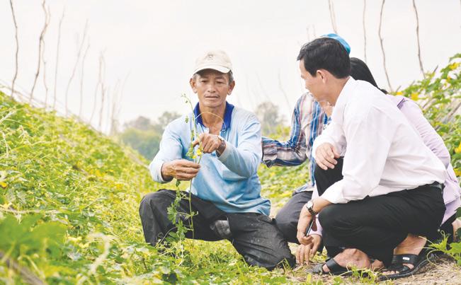 Từ 5.000 m2 đất ruộng cho lợi nhuận thấp, ông Nguyễn Văn Chạy (xã Tân An, huyện Tân Hiệp, tỉnh Kiên Giang) đã mạnh dạn chuyển sang trồng rau màu các loại, dù vấp phải sự ngăn cản của nhiều người. Nhờ đó, mỗi năm ông Chạy thu về gần 100 triệu đồng.