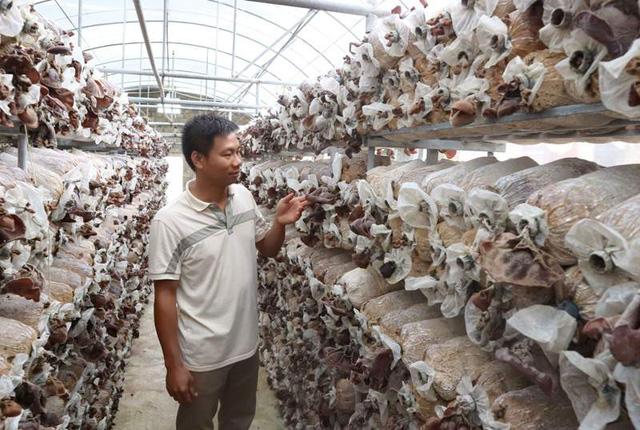Trang trại trồng nấm quy mô lớn của anh Trúc.