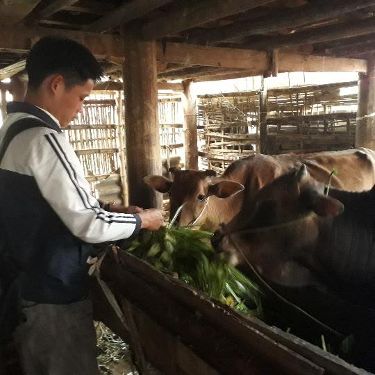 Nguồn vốn Quỹ HTND mở ra cơ hội đổi đời cho nông dân.VC