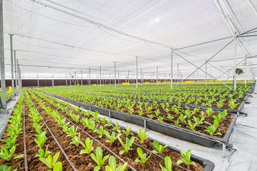 Nhiều doanh nghiệp lớn xác định trọng tâm phát triển nông nghiệp thời gian tới.