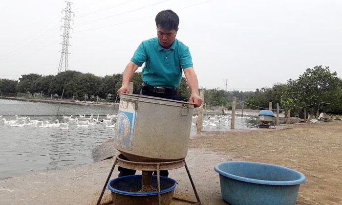 Anh Nguyễn Văn Tiêu đang chăm sóc vịt tại trang trại của gia đình.