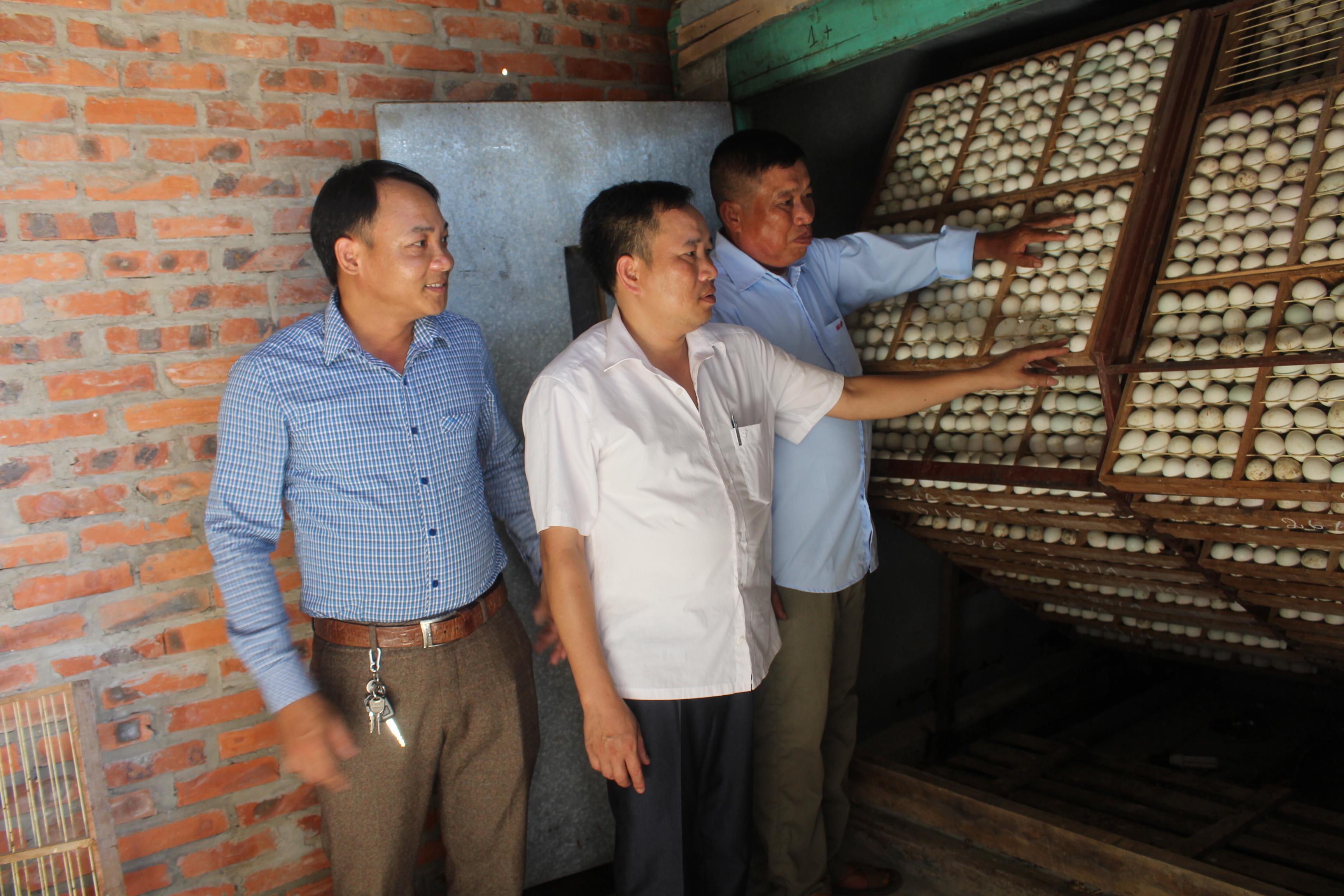 Nhiều hộ dân trên địa bàn tỉnh Bắc Ninh có điều kiện đầu tư phát triển sản xuất nông nghiệp.