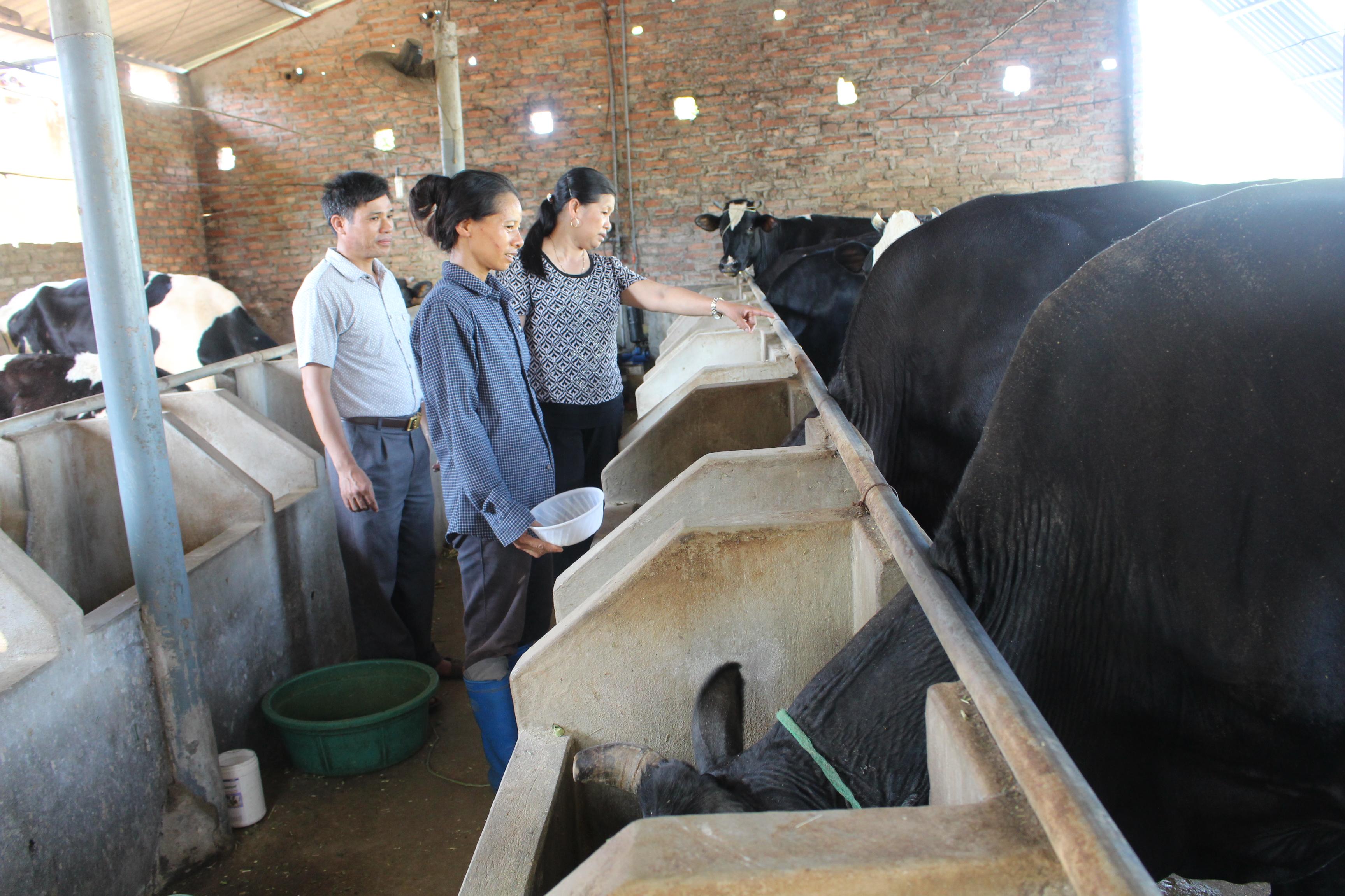 Nhiều mô hình chăn nuôi phát triển tốt.