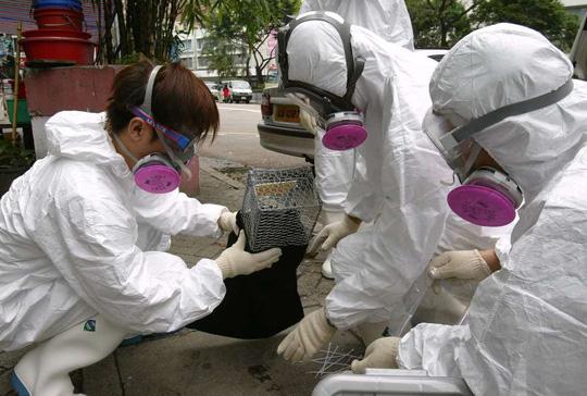 Dịch vụ xử lý chuột tại Hồng Kông gia tăng trong thời gian qua. Ảnh: SCMP