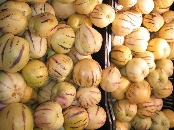 Với 500 gốc dưa pepino vàng đang có, mỗi ngày, gia đình anh Nguyễn Định thu được khoảng 40 kg trái, bán tại vườn 50.000 đồng/kg. (Ảnh: Zing).