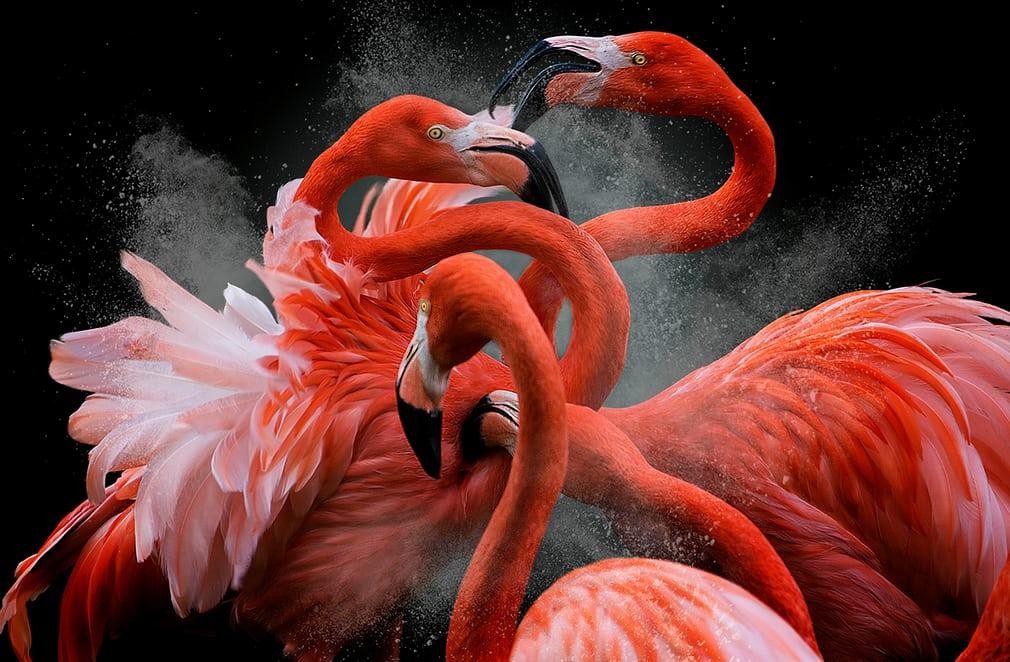 Bức ảnh giúp Pedro Jarque Krebs đoạt giải Bird photographer of the year và chiến thắng ở hạng mục Ảnh sáng tạo.