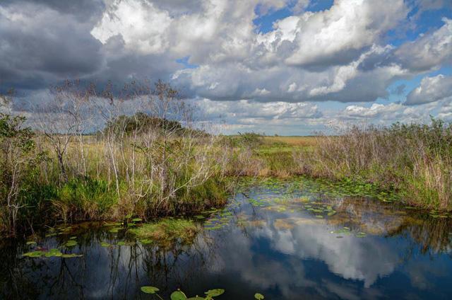 Số lượng trăn Miến Điện ở Florida vẫn chưa có dấu hiệu suy giảm.