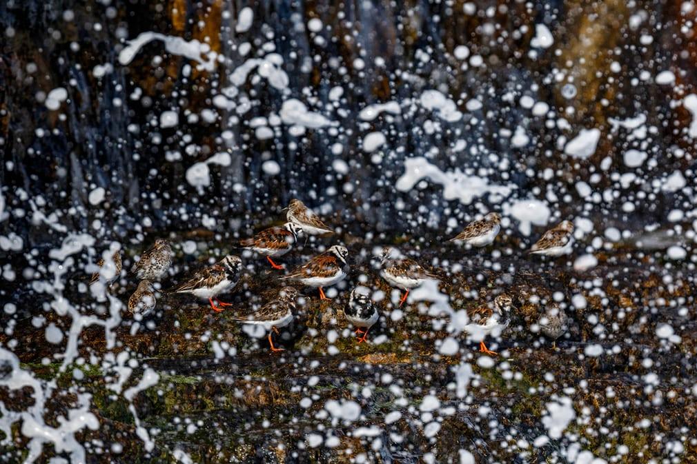 Giải bạc ở hạng mục Chim trong thiên nhiên được trao cho nhiếp ảnh gia Mario Suarez Porras, cũng đến từ Tây Ban Nha.