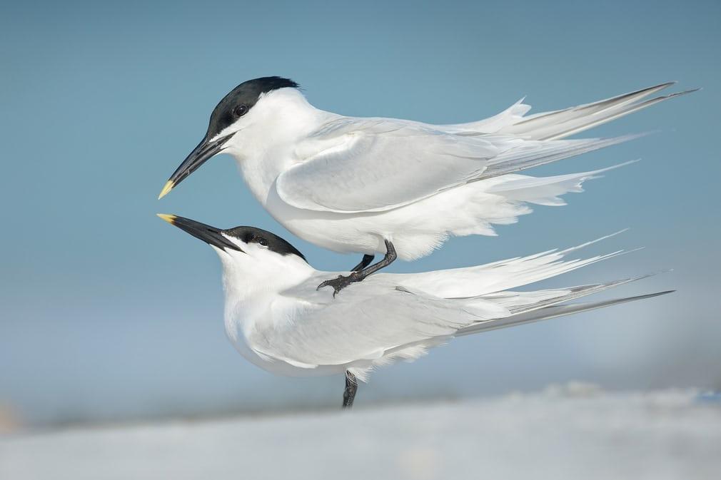 Bức ảnh giúp nhiếp ảnh gia Petr Bambousek đến từ Cộng hòa Séc đoạt giải bạc ở hạng mục Tập tính loài chim.