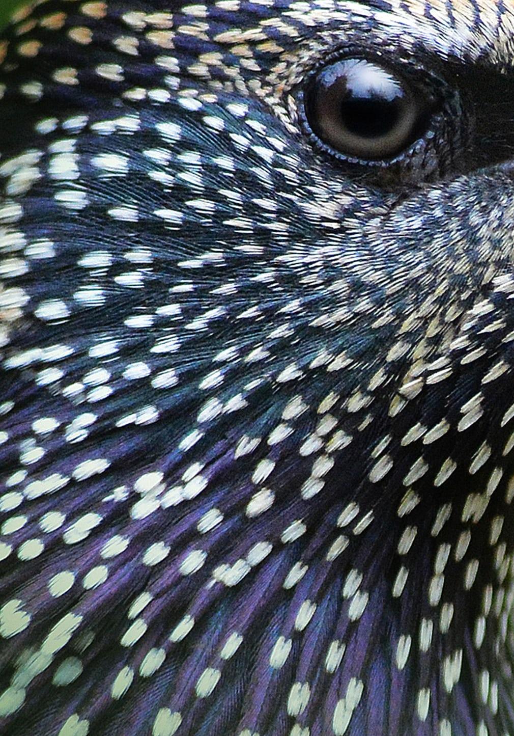 Bức ảnh chụp cận cảnh mắt chim sáo đá giúp nhiếp ảnh gia người Anh Martin Grace đoạt giải bạc ở hạng mục Tập trung vào chi tiết.