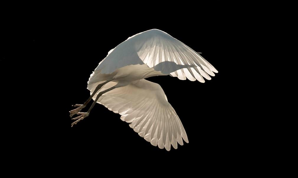 Nhiếp ảnh gia người Anh Sienna Anderson chiến thắng ở hạng mục Ảnh chim bay với tác phẩm chụp một con cò trắng.