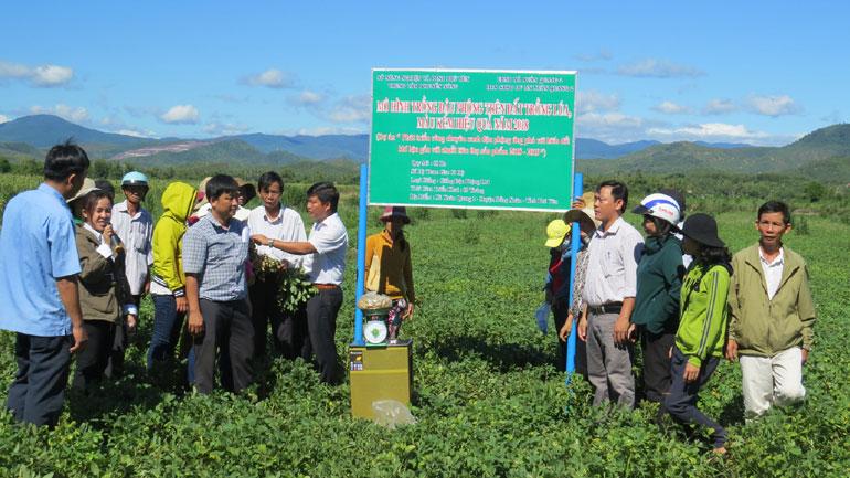 Nông dân tham quan mô hình trồng đậu phộng tại xã Xuân Quang 2 (huyện Đồng Xuân) - Ảnh: LÊ Trâm Trâm
