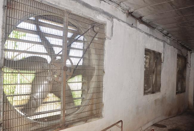 Các khu chuồng trại tại HTX Hòa Mỹ đều có lắp đặt hệ thống quạt thông gió hiện đại.