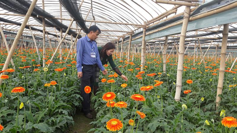 Mô hình sản xuất nông nghiệp ứng dụng công nghệ cao tại xã Song Phượng (huyện Đan Phượng)