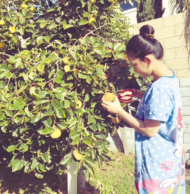 Diễn viên Kim Hiền thu hoạch hồng.