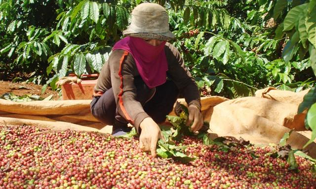 """Chuyên gia kinh tế """"mách nước"""" cho nông sản Việt - Ảnh 1."""