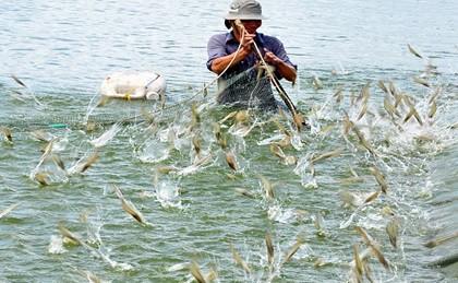 """Tôm cá """"mắc cạn"""", mục tiêu 10 tỷ USD đang xa vời - Ảnh 2."""