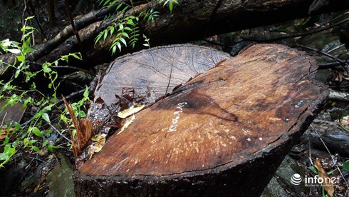 Hàng loạt cây gỗ lớn vùng lõi Khu bảo tồn Pù Luông bị chặt hạ để lấy... phong lan - Ảnh 1.